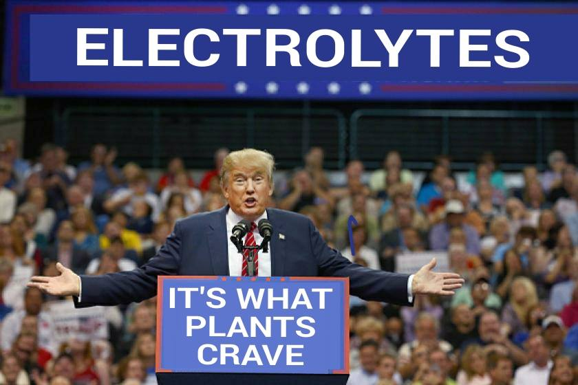 electrolytes-its-what-plants-crave-idiocracy-donald-trump-1459533783.jpg